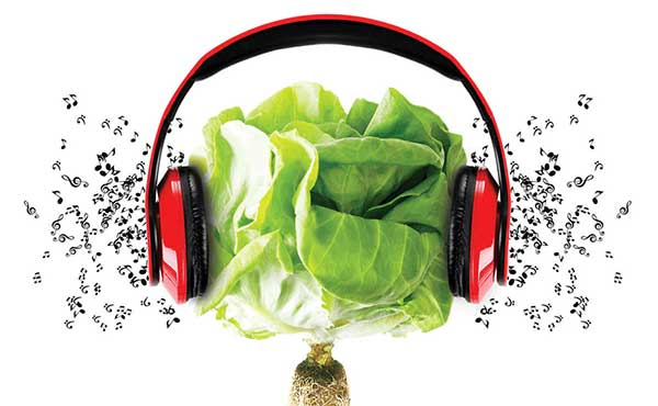 efeitos da música