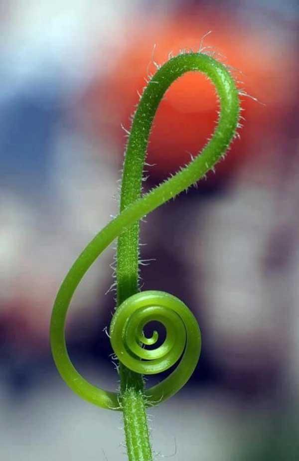 musicas e plantas
