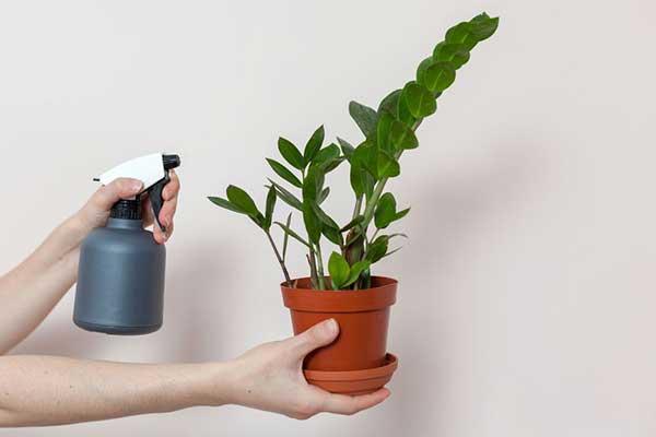 tutorial de plantio