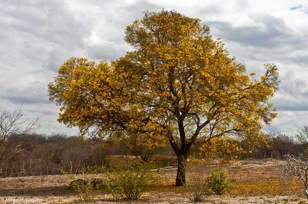 imagens da árore