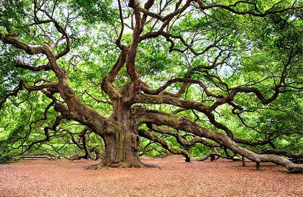 troncos grossos