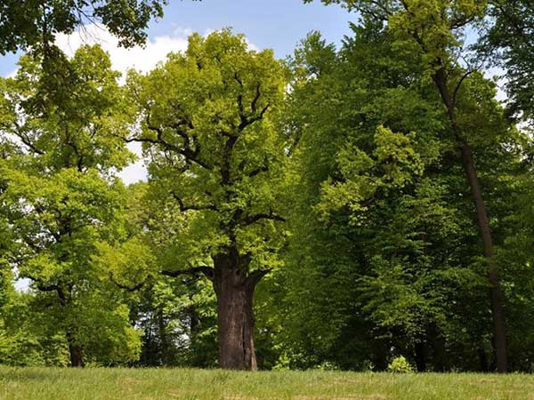 troncos lindos