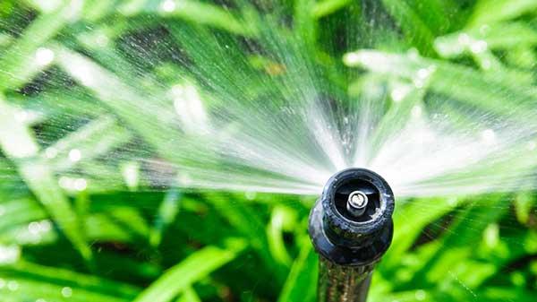 irrigação de plantas