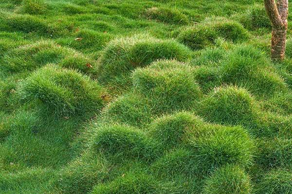 Aprenda a cuidar da sua grama recém plantada