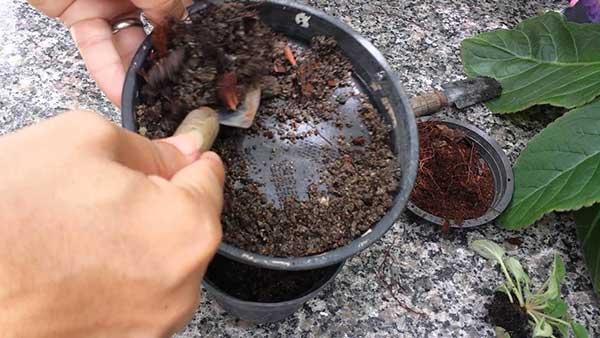 Como Plantar com Substrato