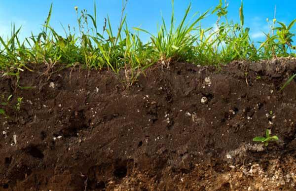 Como plantar com terra vegetal