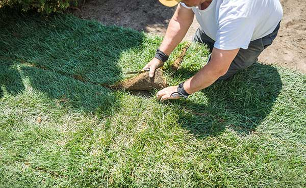 Como plantar corretamente grama tipo tapete