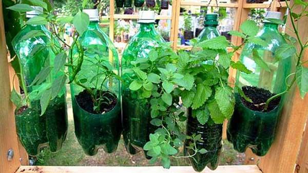 Como preparar a terra para plantar com garrafa pet