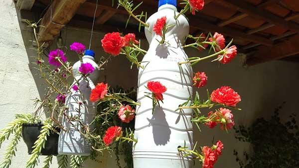 Flores para cultivar na garrafa pet