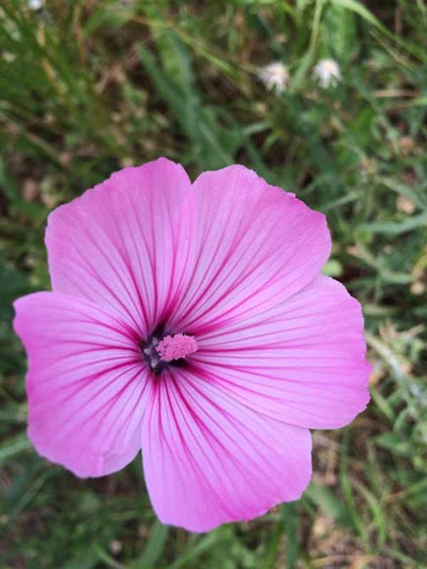 cor pink