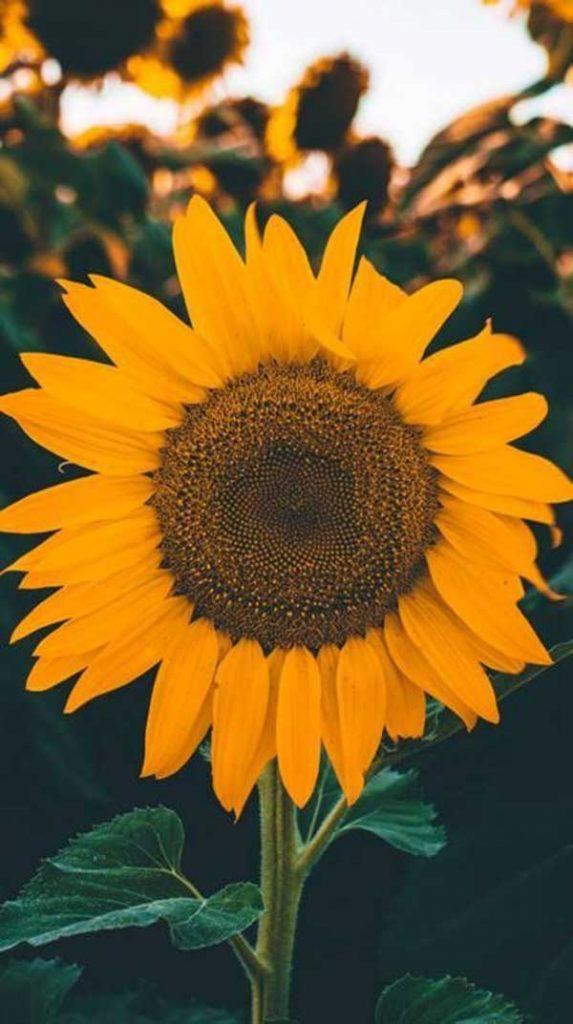 foto da flor 1 573x1024