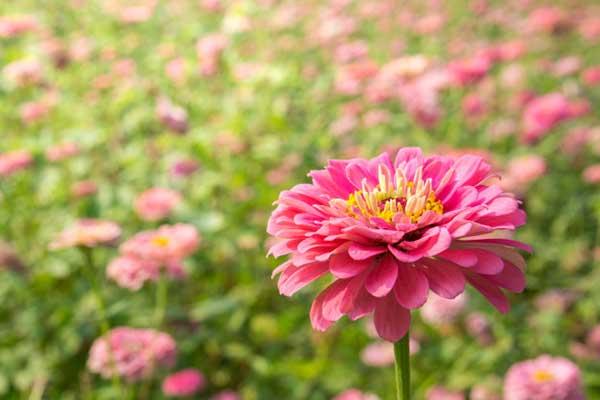 foto da flor 2