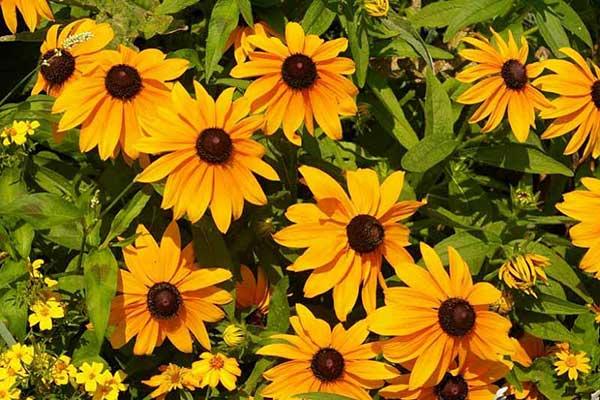 fotos da flor 1 1