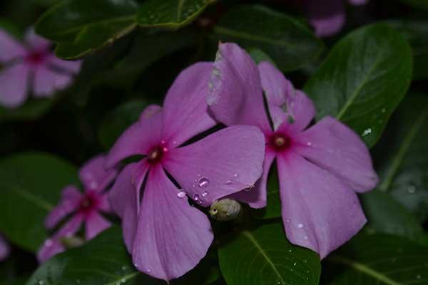 imagens da planta 1