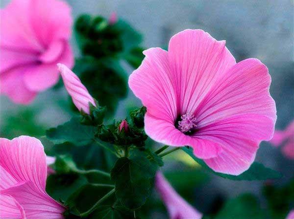 imagens de plantas