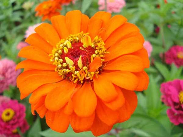 laranja 8