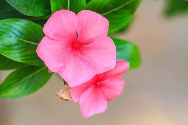 rosa claro 5