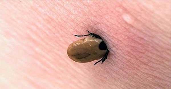 parasita de plantas