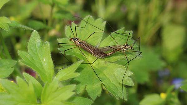 Como Acabar com Mosquitos do seu Jardim