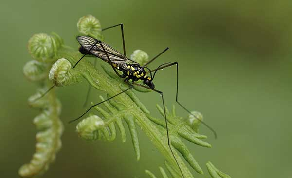 mosquito em casa