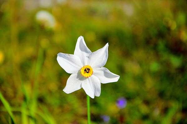 Narciso 1