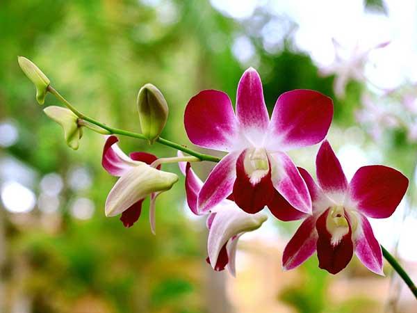 Orquideas Alergicas
