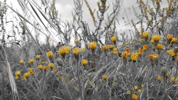 Plantas Alergicas