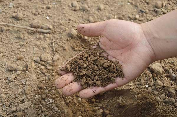 Quais sao os beneficios da compostagem
