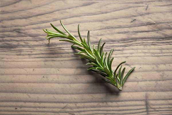 Rosmarinus officinalis 6
