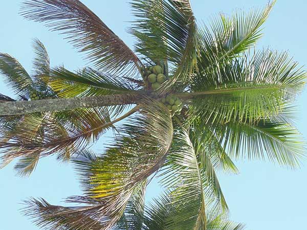 com cocos