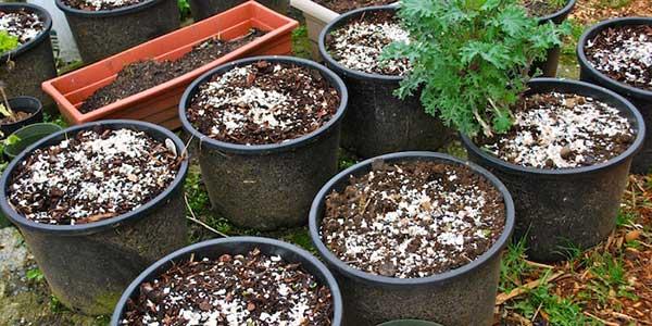 compostagem com Cascas de Ovo