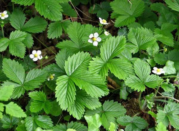 fotos das flores da planta