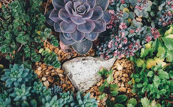 jardim caseiro