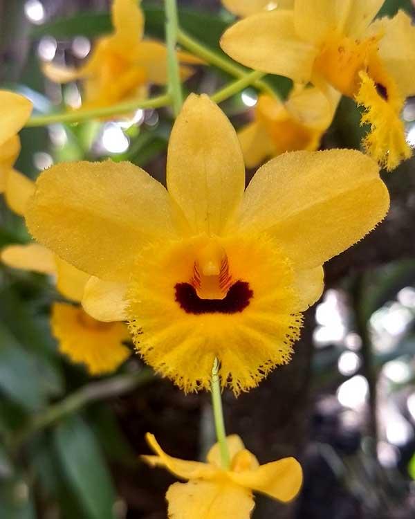 Orquideas 5