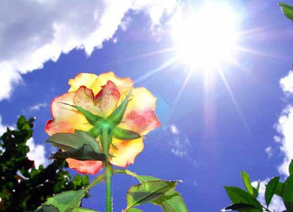 Falta de Luz do Sol