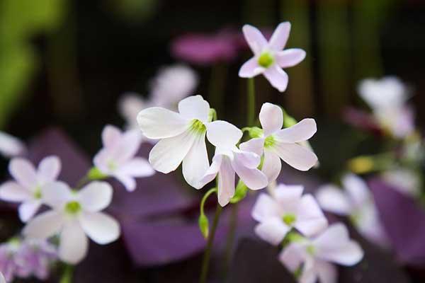 Flores da planta