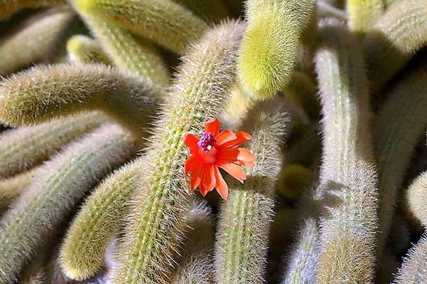 Fotos da flor laranja
