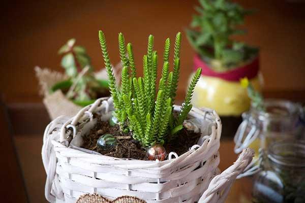 Melhores Plantas para Casas Pequenas