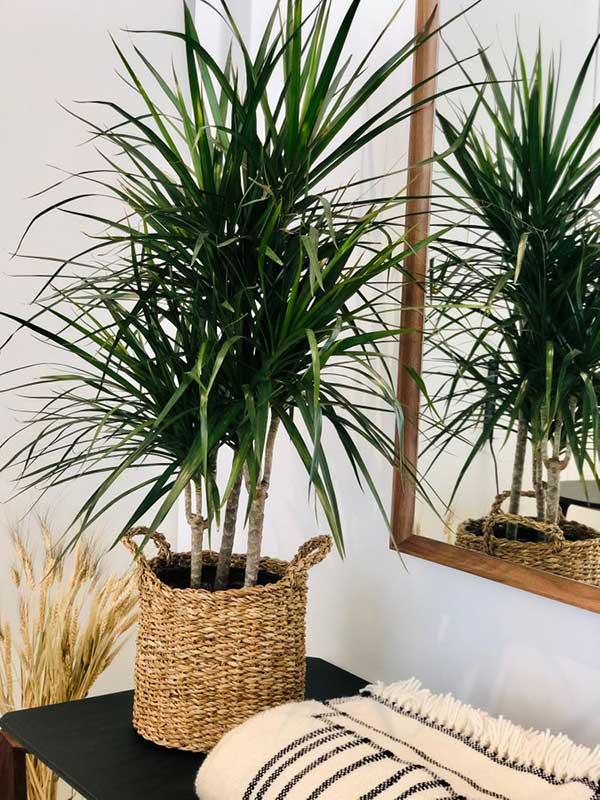 para decorar ambientes