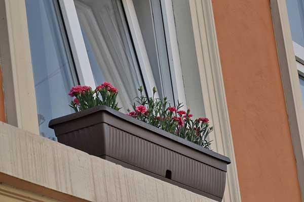 plantas floridas para janela