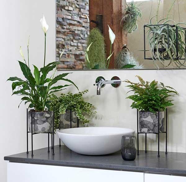 plantas para banheiros