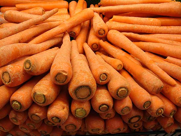 Cenouras 1