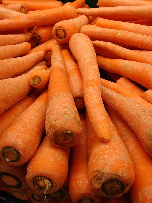 Cenouras 2