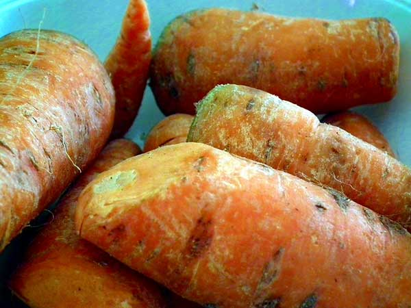 Cenouras 3
