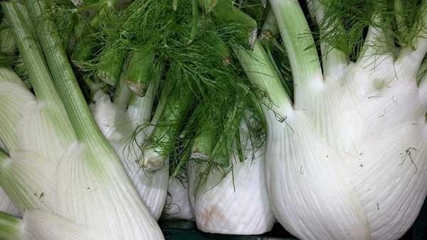 Vegetais para Cultivar no Frio