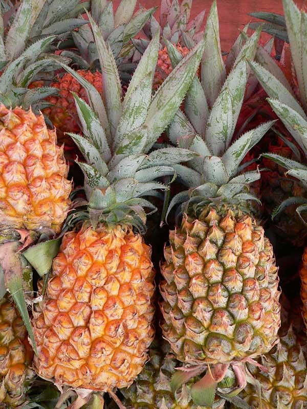 Ananas comosus 2