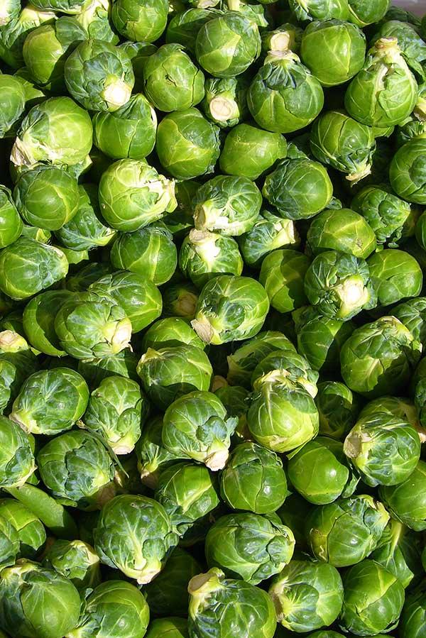 Brassica oleracea var. gemmifera 2