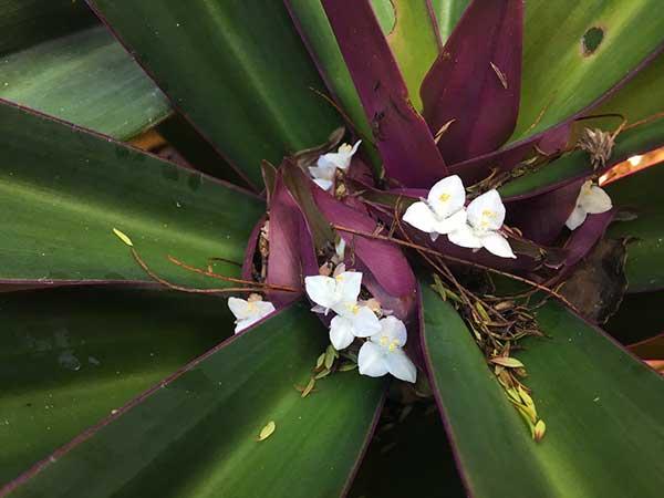 Flores brancas e pequenas