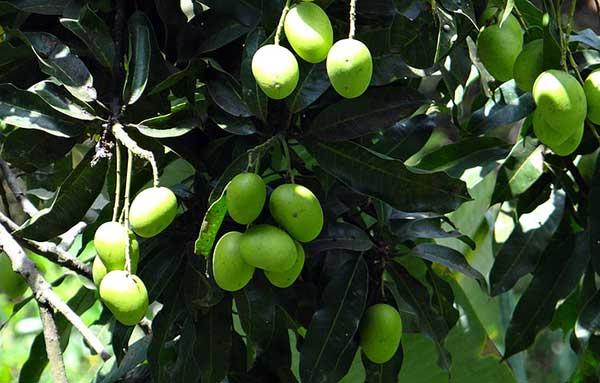 cor verde 2