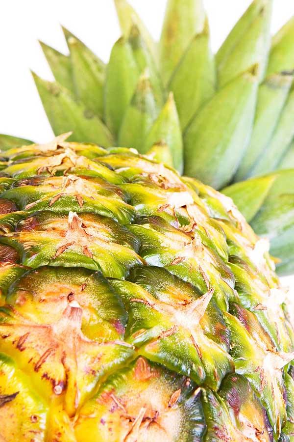 cultivo de abacaxi